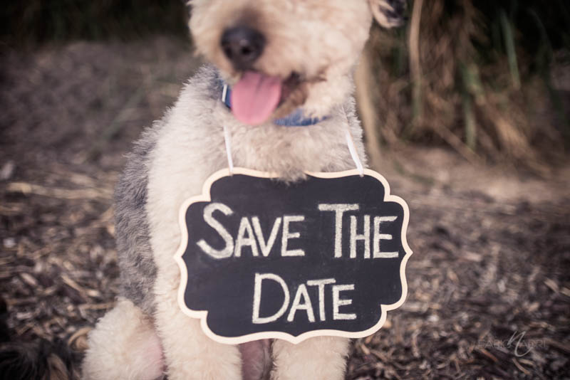 Save the date dog photo